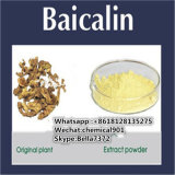 Best Selling Yellow Powder Plant Extract Baicalin CAS: 21967-41-9