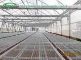 Research Nursery Greenhouse in film cover for Sale