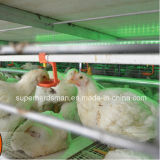 High Cost-Performance Poultry Equipment Battery Cage for Layer