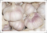 2017 New Season China Good Quality Pure White Fresh Garlic