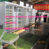 Automatic Bean Sprout Growing Machine