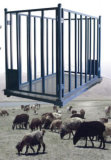 Animal Weighing Scale for Sheep
