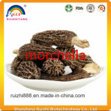 Green Food Mushroom Morchella The High-Quality Goods