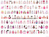 European Fragrance Perfume/ France Fragrance Perfume