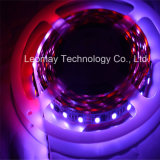 Hot Sold RGB LED Strips Ws2811 IC