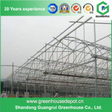 Cheap and High Quality Film Greenhouse for Sale
