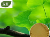 100% Natural Ginkgo Biloba Leaf Extract