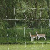 Solid Lock Fixed Knot Deer Fence