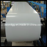 Galvanized Color Coated Steel Coil