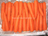 Fresh Exporting Shandong Carrot