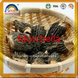 GMP Factory Hot Sell Dried Morel Mushrooms Morchella