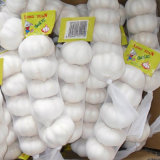 New Crop Fresh White Garlic Grade a