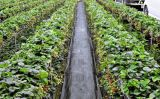 5m Width Weed Mat Roll /Ground Cover/ Weed Control Fabric Mat with UV Treatment