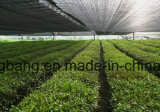 Anti-Grass PP Woven Ground Cover Fabric Weed Mat