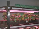18W LED T8 Fluorescent Plant Grow Light/Tube/Lite/Licht