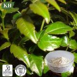 Natural Vine Tea Extract Myricetin 50%-98% Lower Cholesterol