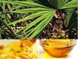 100% Pure Nature Saw Palmetto Extract Oil 85% High Quality, Men′s Healthy