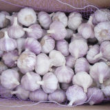 Fresh New Crop Normal White Garlic for Brazil Market