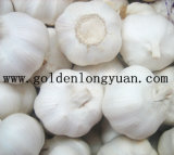 Good New Crop White Garlic From Jinxiang