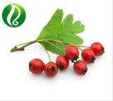 Hawthorne Berry Extract 10: 1