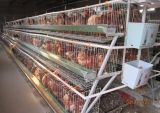 Hot Sale Good Quality Poultry Farm Layer Chicken Cage