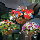 Summer Blossom Hanging Basket with Coco Liner