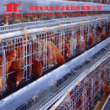 Egg Collection System Animal Cage Automatic Chicken Cage