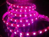 World Dawn Ce RGB LED Strip Light (WD SMD5050 60 RGB)