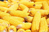 Nature Corn Starch Food Grade