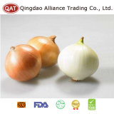 Expot Quality Fresh Yellow Onion