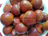 New Crop Fresh Chestnut (30-40, 40-50, 50-60, 40-60)