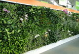High Quality Artificial Plants and Flowers of Green Wall Gu-Wall007689220091
