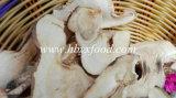 Pleurotus Eryngii Mushroom Slice and China Mushroom Piece