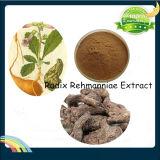 Rehmannia Glutionsa Root Extract, Radix Rehmanniae Extract