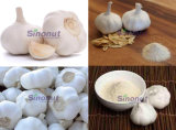Pure White Garlic with Size 45mm, 50mm, 60mm