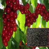 Biochar Organic Fertilizer with More Than 10% Fulvic Acid