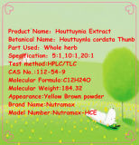 100% Natural Houttuyniae Extract 10: 1