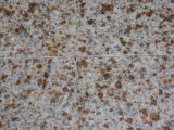 Granite G682, Rust, New China Gold Yellow Polished Granite Tile