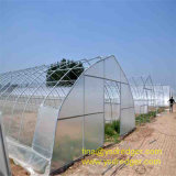 Best Price Portable Film Greenhouse with Galvanized Pipe