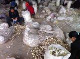 2017 New Crop Garlic Low Price