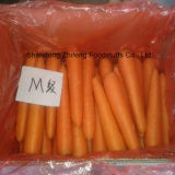 Exporting Fresh Carrot with Sweet Taste
