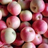 Fresh Gala Apple Export to Bangladesh in 20kg Carton (150-216#)