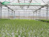 Modern Multi Span Film Greenhouse for Vegetable