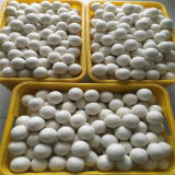 Natural Wool Felt Dryer Balls with Low Price