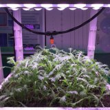 Lens and Reflector Cup to Concentrate Radiation Grow Light