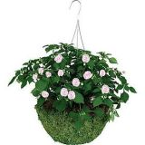 Moss Hanging Basket with Chains, Green