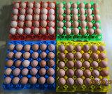Plastic Egg Tray Machine 250ton