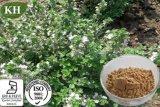 Thyme Extract/ Thymus Vulgaris Extract