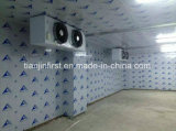 Meat and Fish Vegetable Cold Storage Room