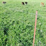 High Quality Galvanzied Field Cattle Fence with T Post